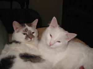Bailey & Becco